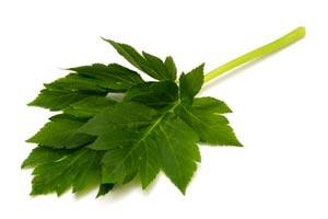 明日葉の青汁比較ランキング 薬を凌ぐパワーのアシタバは栄養満点