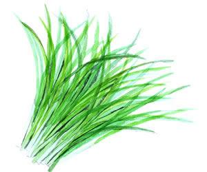 大麦若葉の青汁人気ランキング 大麦若葉の青汁は飲みやすい!